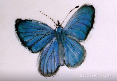 Blauwtje van Margaret Sabee Weefkunst Den Haag